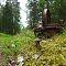 Puravik metsateel