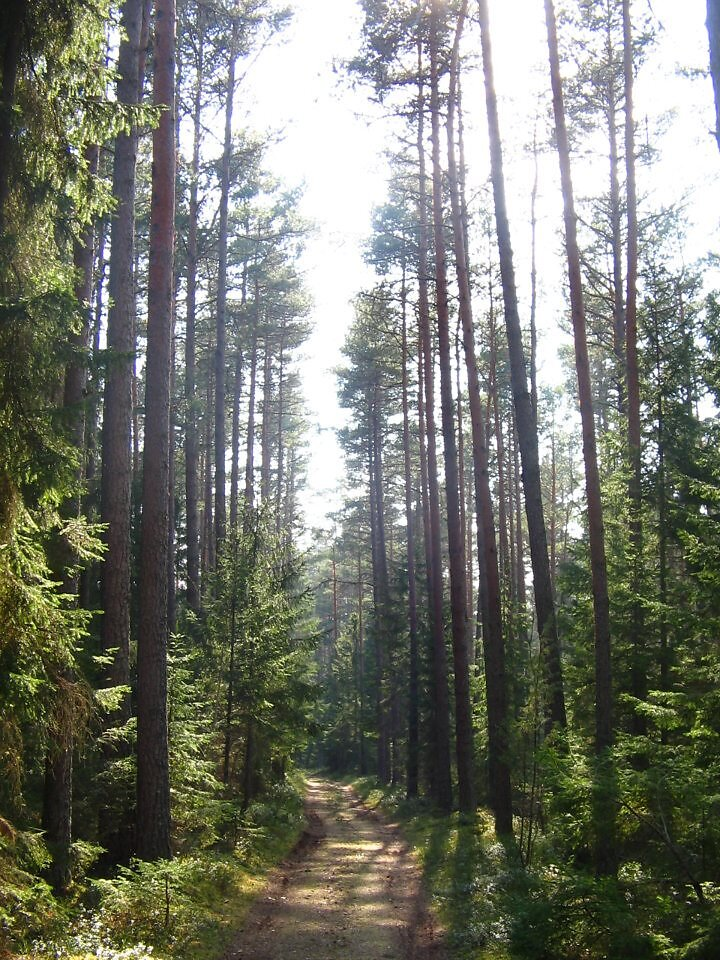 Klooga mets
