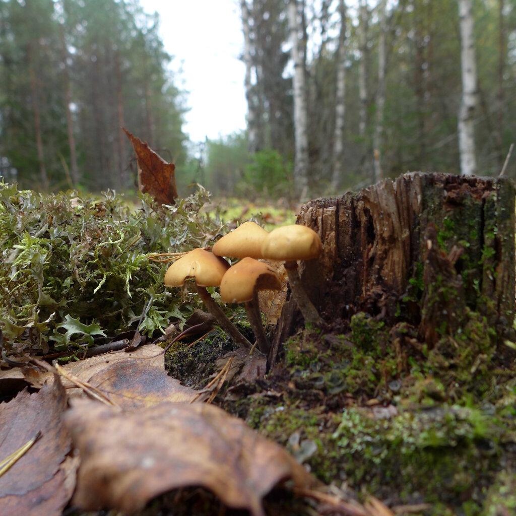 Seened metsateel