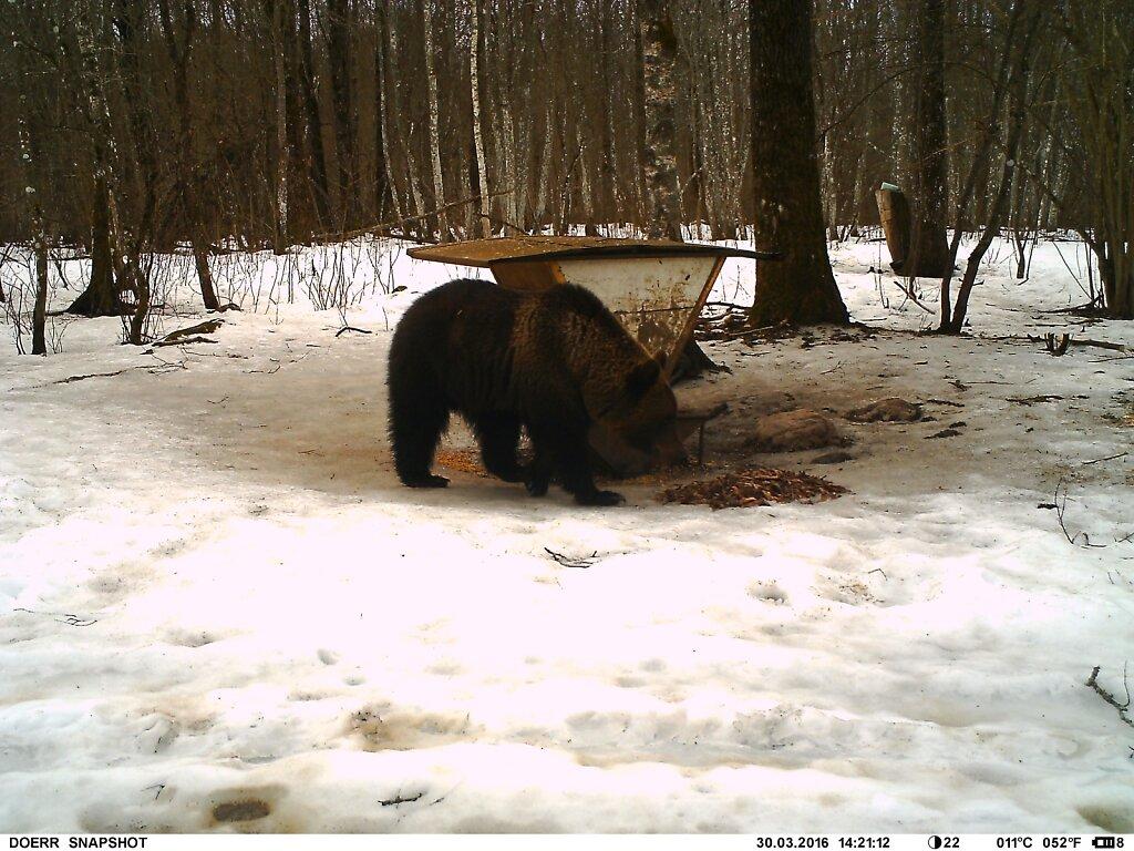 Karu söödakohal