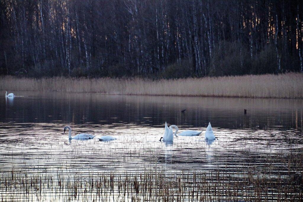 Luiged järvel
