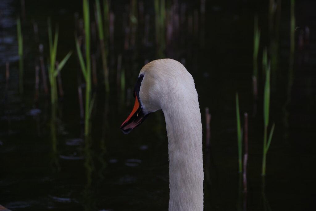 Luik Klooga järvel