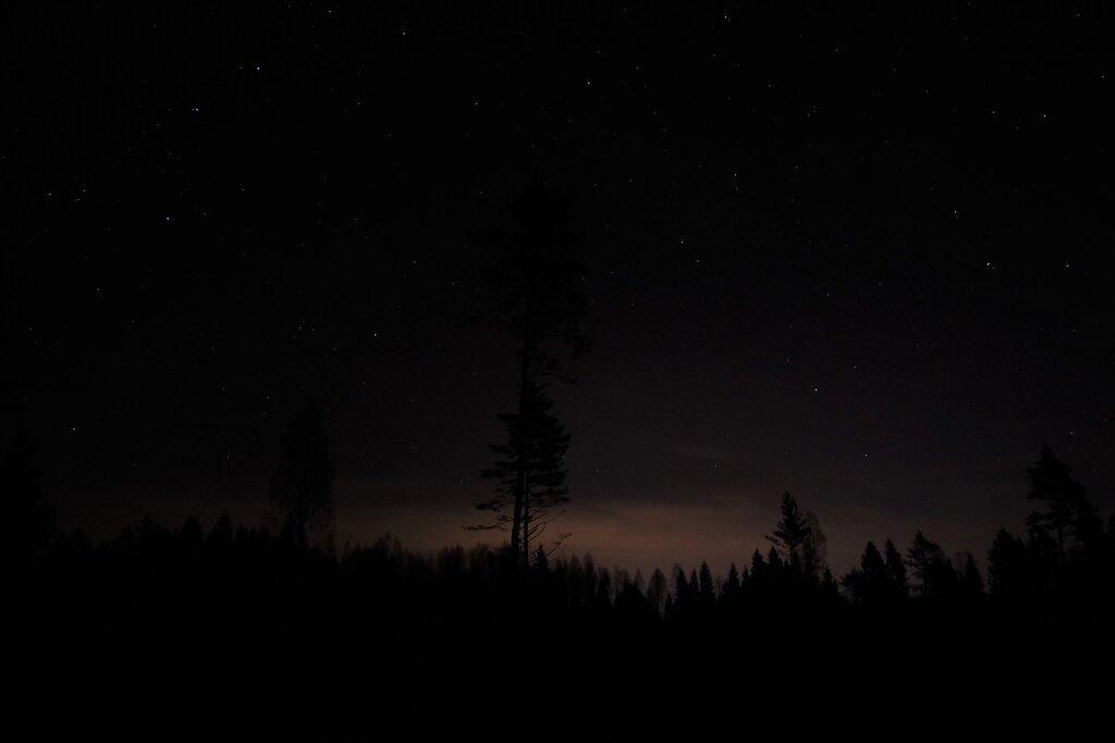 Öine mets