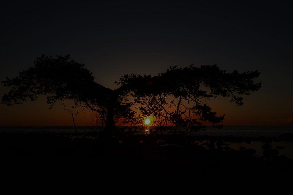 Loojang läbi puu