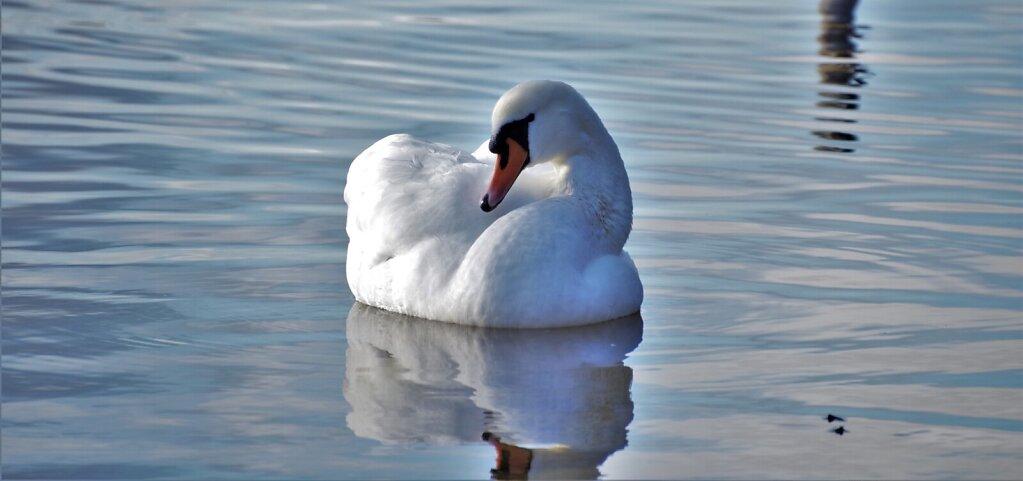 Luik järvel