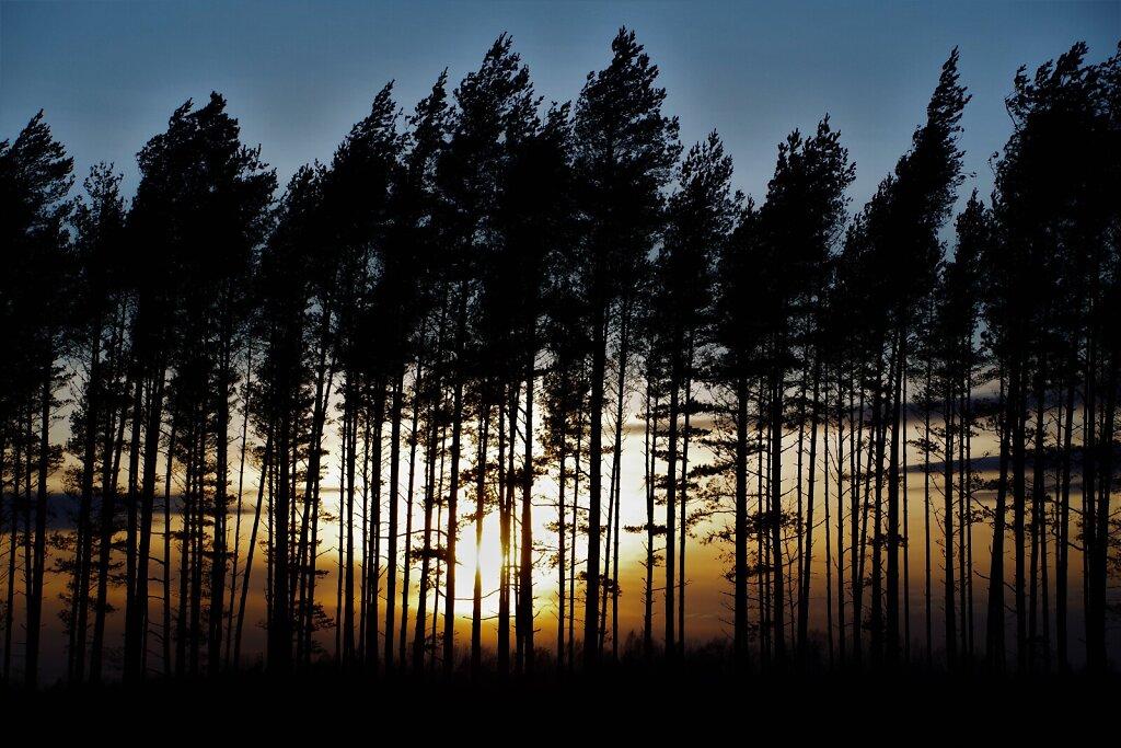 Loojang läbi puude