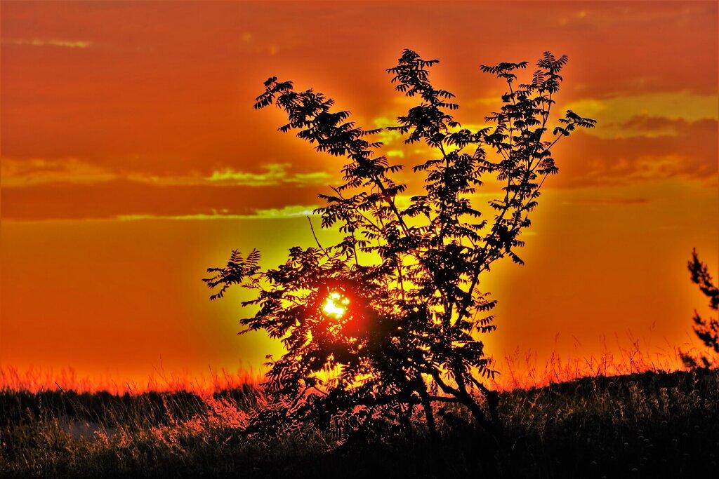Puu rannas loojangu taustal