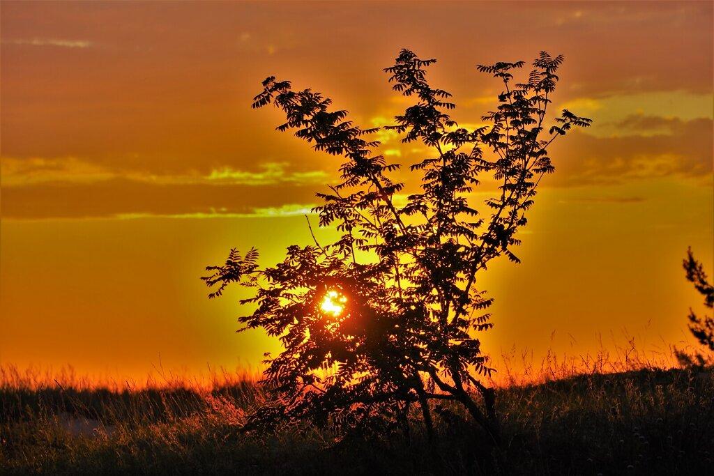 Puu loojangu taustal