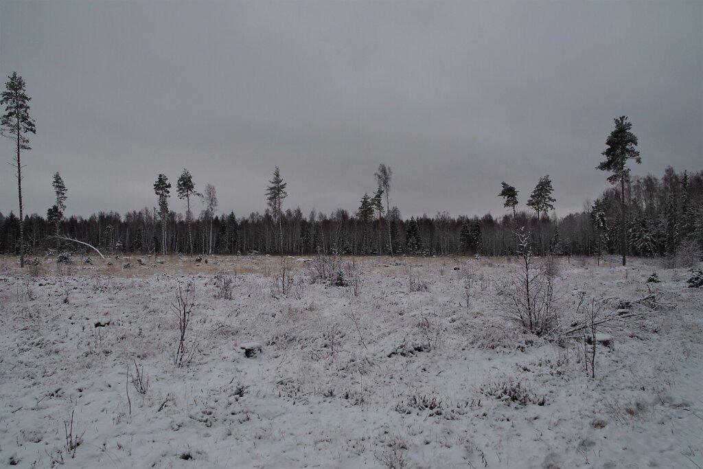Lumine põld